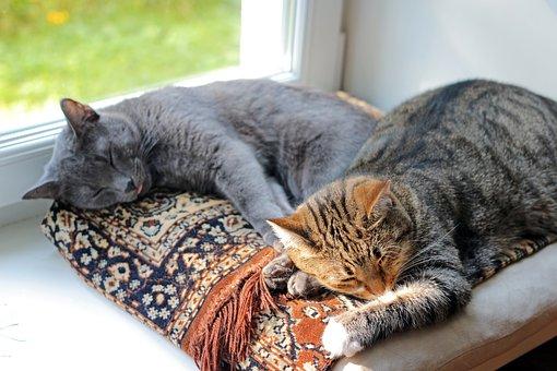 spící kočky